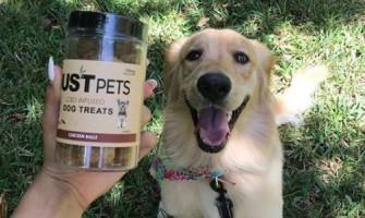 CBD for Pets: Benefits, Risks & Information